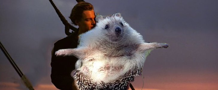 12 Hilarious Hedgehog Photos That Will Restore Your Faith in Photoshop