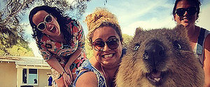 Quokka Selfies Are Officially the Cutest Trend on the Internet