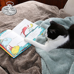 Dr. Seuss Can Help You Name Your Cat -- How About That?