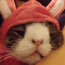 Meet Monty the Odd-Looking Crooked Cat Ambassador