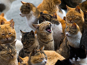 Welcome to Aoshima Island, Where Cats Outnumber Humans 6 to 1