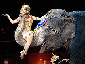 Ringling Bros. and Barnum & Bailey Plan to Phase Out All Elephants Acts from Circus