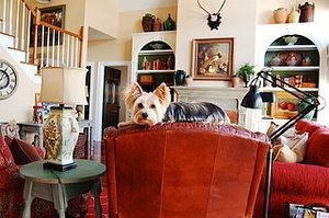 The Best of My Houzz: 50 Design-Loving Pets (50 photos)