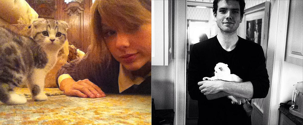 19 Times You Wished You Were Taylor Swift's Cats