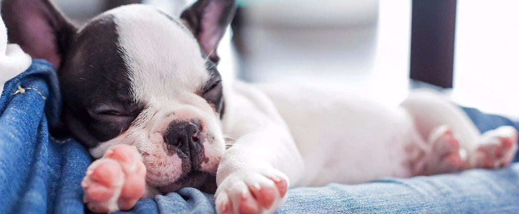 25 of the Cutest Puppy GIFs Ever — You're Welcome