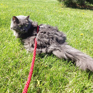 Should Your Kids Walk Your Cat Outside on a Leash?