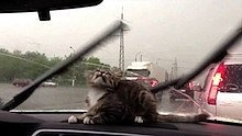 Videos We Love: Watch These Cats Battle Windshield Wipers