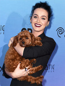 Why Katy Perry Outsources Her Doggy 'Doo-ties'