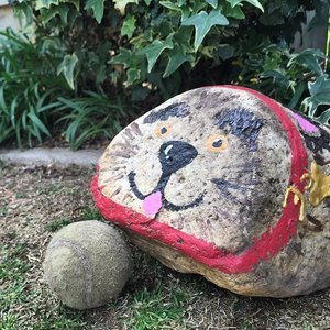 5 Tips for Taking Your Pet Rock to the Dog Park