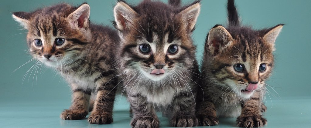 Simba, Elsa, and All the Other Most Popular Cat Names of 2014