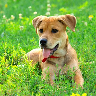Why You Should Microchip Your Pets