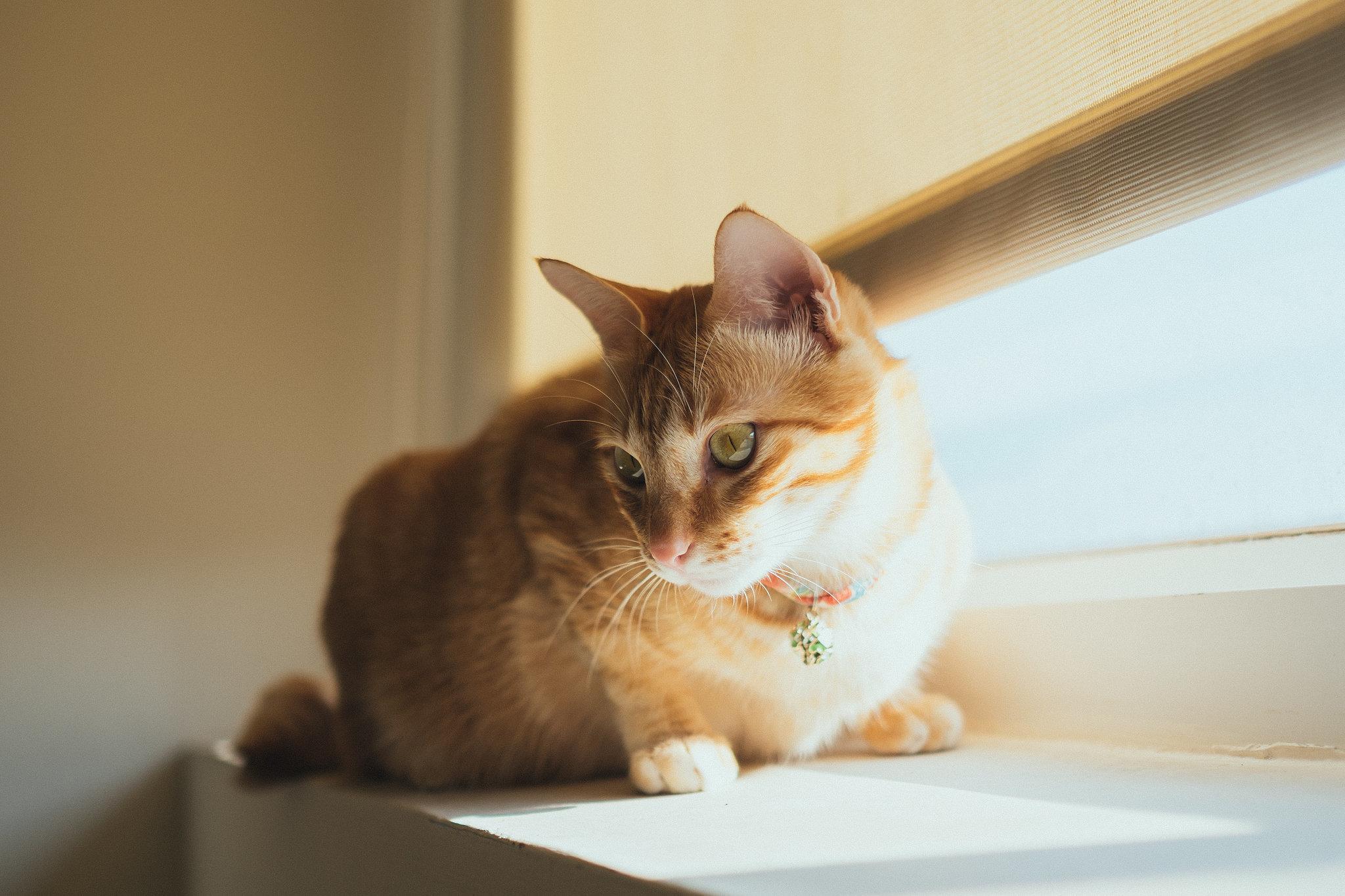 Cat Keeps Meowing At Door