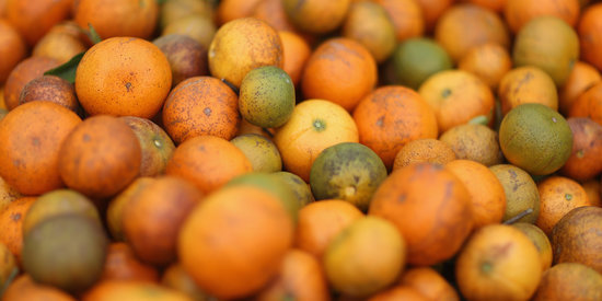 Florida Scientist Finds Promising Treatment For Deadly Citrus Disease