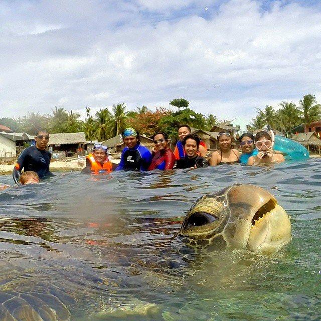 Turtle Tiiiime