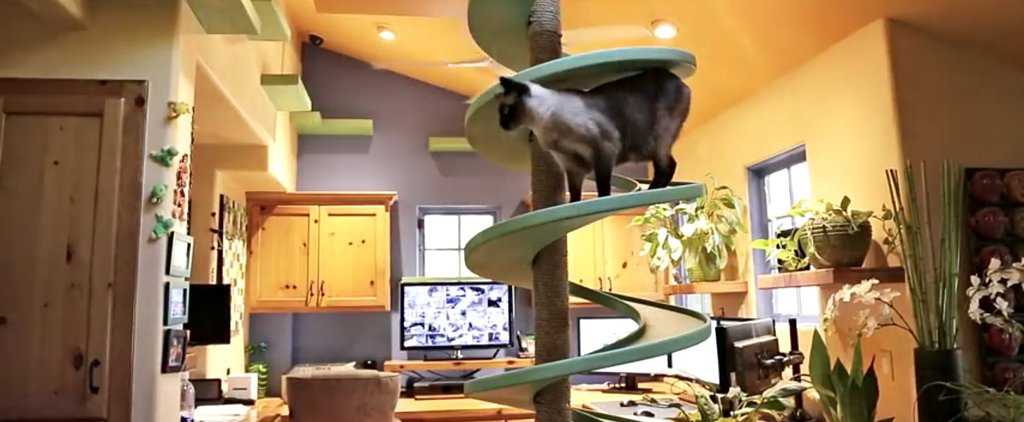 This Man Turned His Home Into an Adorable Cat Playland