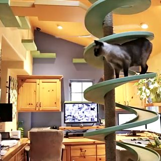 Man Turned His Home Into a Cat Playland