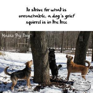 Haiku by Dog: Squirrels. Dogs. Discuss.