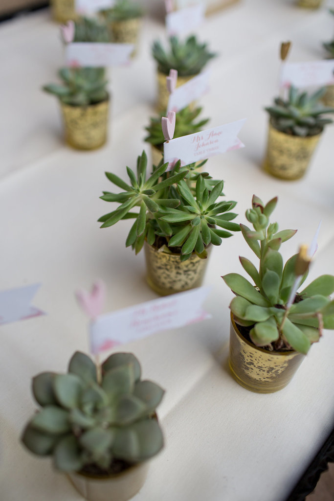 Grow Succulents For Favors