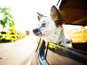 Read This Before You Travel with Your Pets This Summer