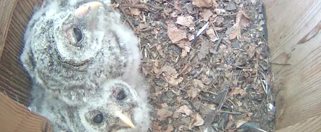 These Baby Owls Need a Name — and You Can Help