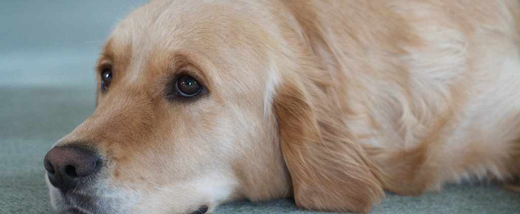 8 Potentially Deadly (and Preventable) Dog Diseases