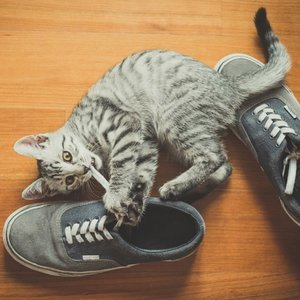 6 Ways I Try to Bring Out the Personality in My Cats