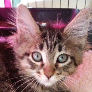 Meet Twister, a Rescue Kitten With a Hind Leg Bent Backward