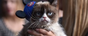Which Famous Cat Are You?