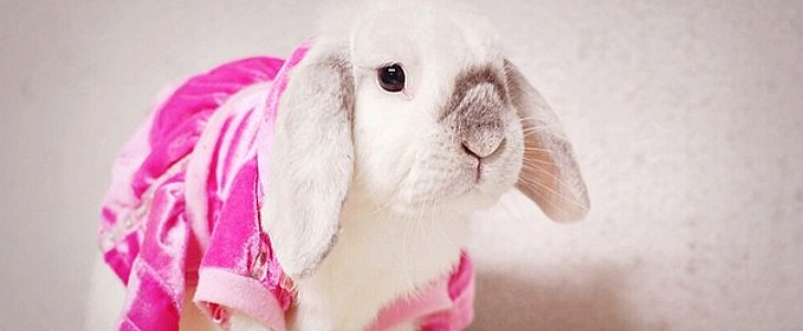 29 Adorable Animals With Better Fashion Than Us
