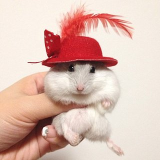 Stylish Pets of Instagram