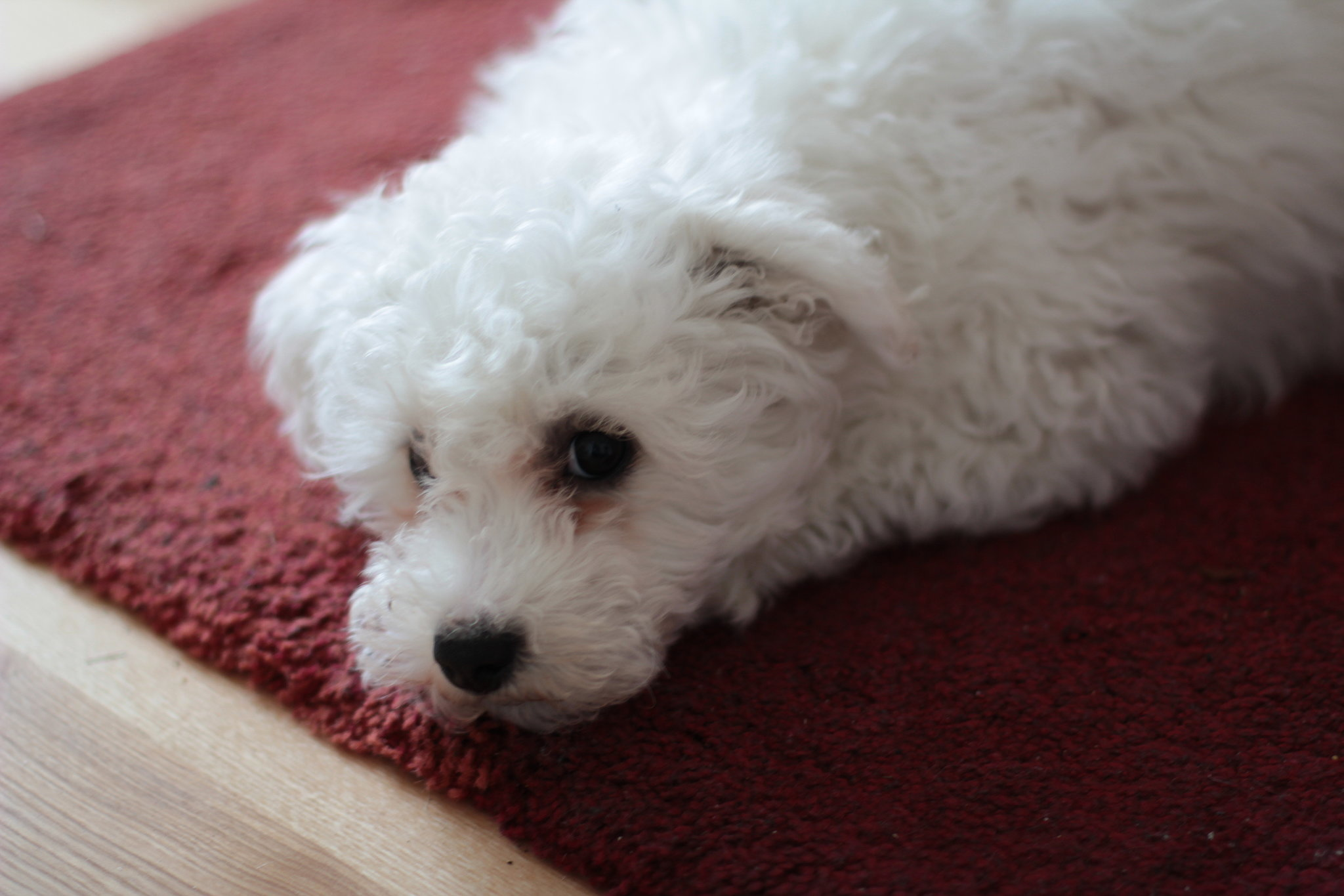 Diy Pet Pee Cleaning Solution Popsugar Pets