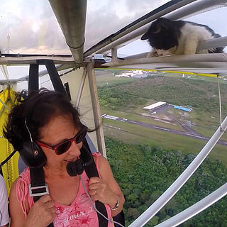 Cat on a Plane Video