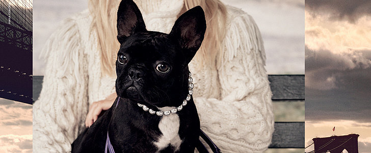 Lady Gaga's Pooch Wears Pearls For Coach's New Campaign