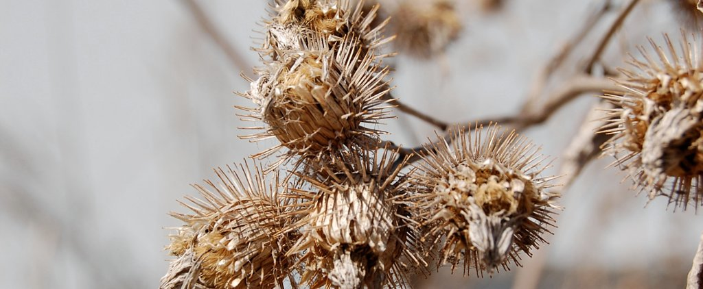 How-To: Remove Pesky Burrs From Your Pup's Fur