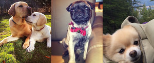 The Cutest Dogs of Instagram