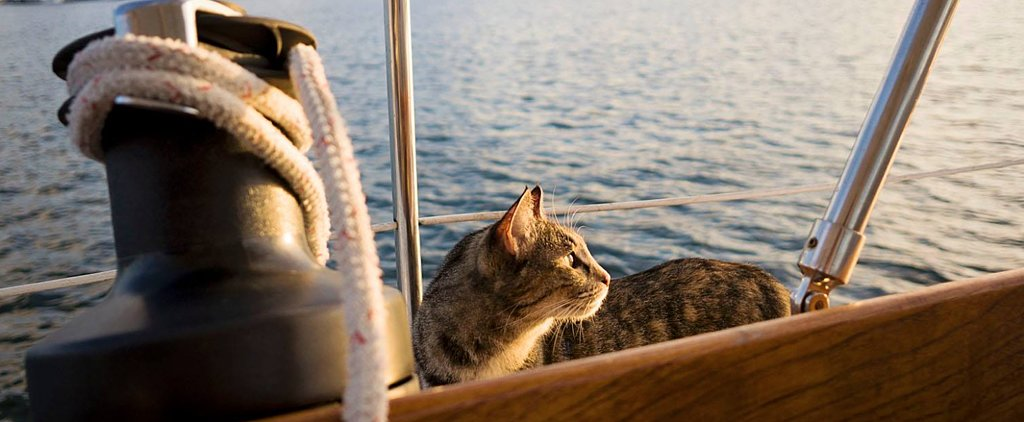 This Cat's Sailing Adventures Will Make You So Jealous