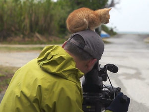Stray Kitten Interrupts Famous Wildlife Photographer's Photoshoot (VIDEO)