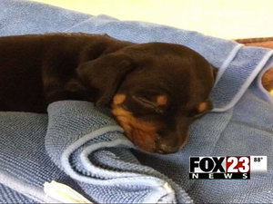 Two Women Arrested for Leaving Puppy in Hot Car to Go To Casino