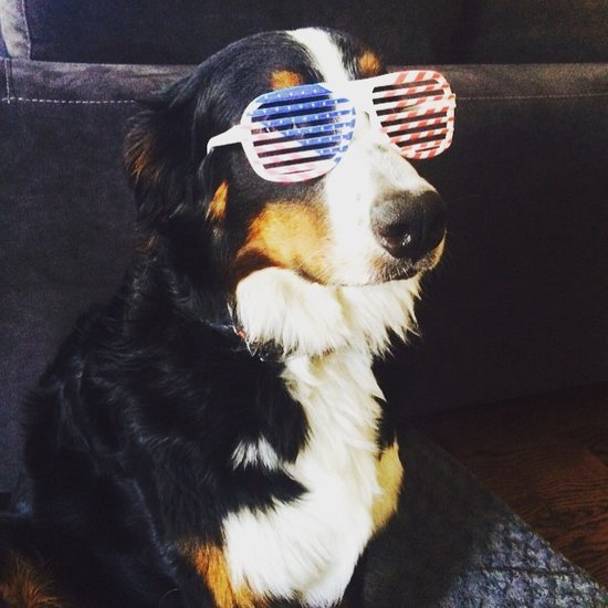 Fourth of July Pets