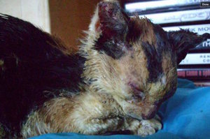 Squidgey the Cat Survived After Being Badly Burned