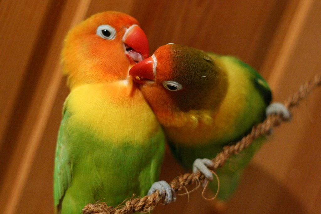 Lovebirds . . . literally! I'm smitten.