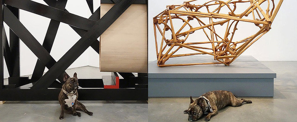 Meet the Dog That Is Taking the Art World by Storm
