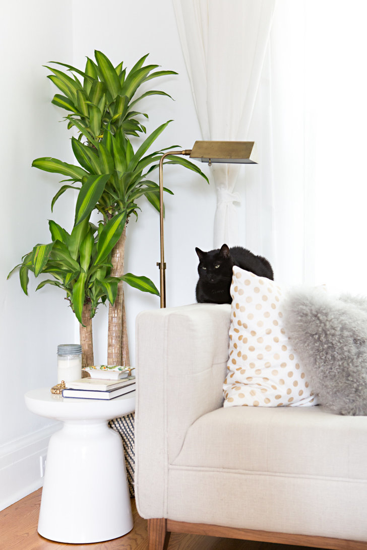 Large indoor plants 17 chic renter hacks that make a huge difference popsugar home - Best indoor large plants ...