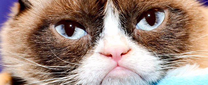 14 Celeb Cats That Are Taking Over Twitter Right Meow