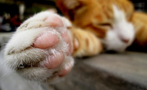 What Do You Call Your Cats' Paw Pads?