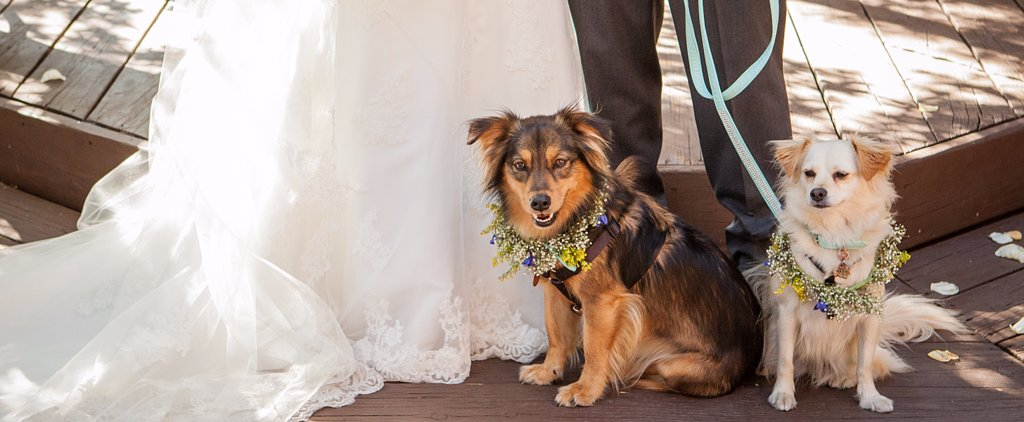 11 Adorable Wedding Favors For Dog-Lovers