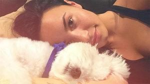 Demi Lovato's Adorable Dog Dies in 'Tragic Accident'