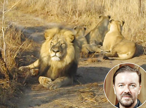 "Ricky Gervais Calls Killing of Cecil the Lion ""Mental"" -- Plus, More Stars Speak Out"