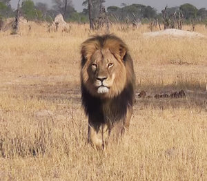"Dentist Who Killed Cecil the Lion Apologizes to Patients While PETA Says He Should Be ""Hanged"""