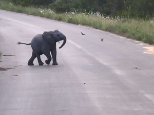 Baby Elephant Plays with Birds, Is a Great Pitch for a Family Film (VIDEO)